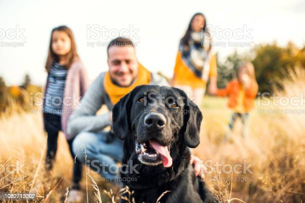 Young family with two small children and a dog on a meadow in autumn picture id1082713202?b=1&k=6&m=1082713202&s=612x612&h=lldjesjrupfbxsai1npvzntom62yypukmdn5rvrhbk4=