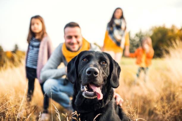 una familia joven con dos niños pequeños y un perro en un prado en la naturaleza otoño. - mascota fotografías e imágenes de stock