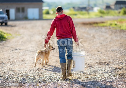 Rear view of a young man working on a dairy farm, walking with his dog while carrying a bucket of animal feed.