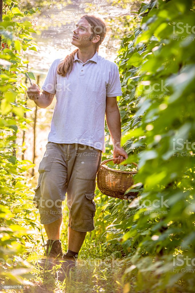 Young Farmer Checking His Bean Plants Lizenzfreies stock-foto