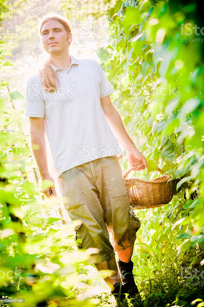 Young Farmer Checking His Bean Plants royalty-free stock photo