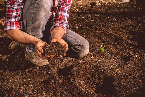 Young Farmer Checking The Soil On His Field Stock Photo - Download Image Now