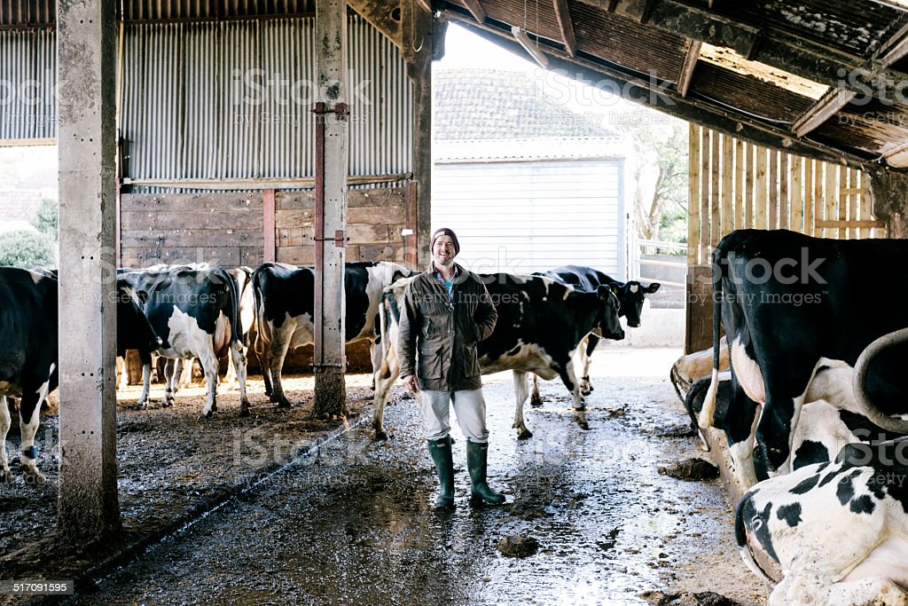 Young farmer, dairy herd stock photo