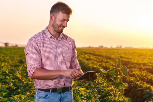 junglandwirt eingereichten tablet in den händen hält und soja corp zu prüfen. - farmer stock-fotos und bilder