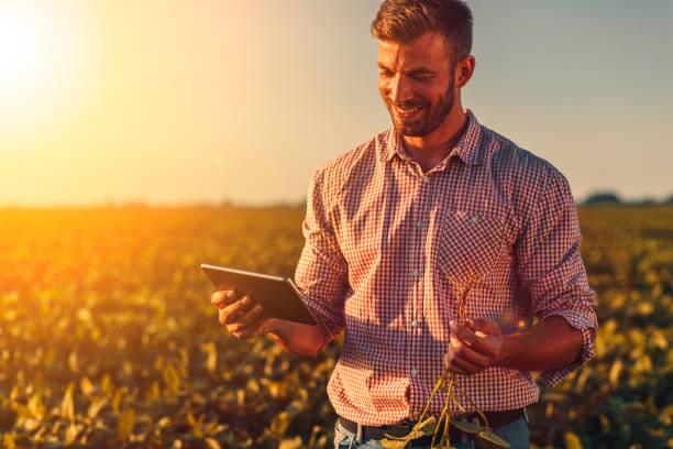 그의 손에 태블릿을 들고 대두 공사를 검사에 젊은 농부. - 농업 뉴스 사진 이미지