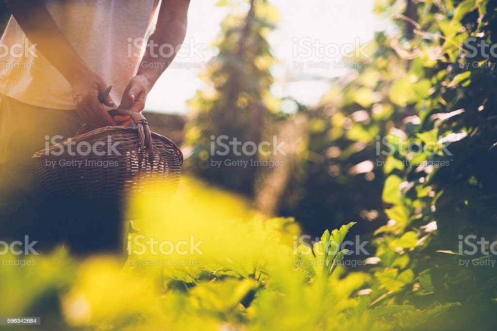 Young Farmer in His Vegetable Garden Lizenzfreies stock-foto
