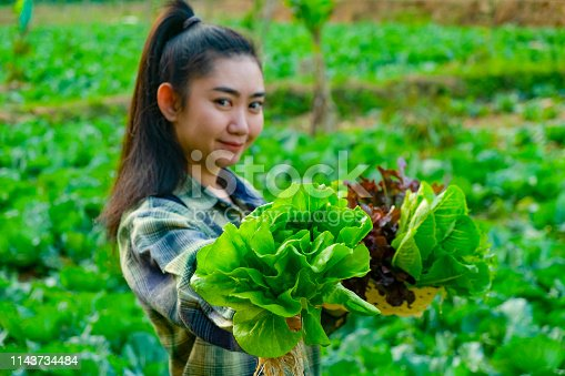 1096949092 istock photo Young farmer is holding vegetable green oak, Hydroponic eco organic modern smart farm 4.0 technology 1143734484