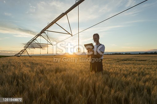 Serious young Caucasian farmer or agronomist standing in ripe wheat field beneath center pivot irrigation system and using a tablet at sunset