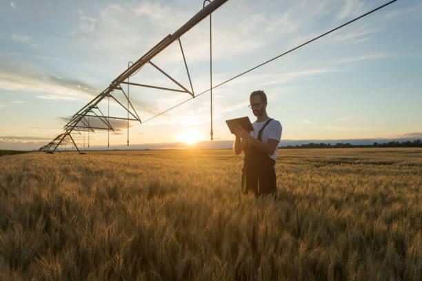 junglandwirt oder landwirt steht im weizenfeld unter bewässerungssystem und verwendet eine tablette - landwirtschaft stock-fotos und bilder
