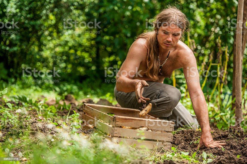Young Farmer Picking Up Potatoe Lizenzfreies stock-foto