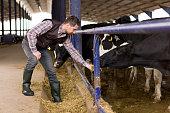 Young farmer feeding cow.