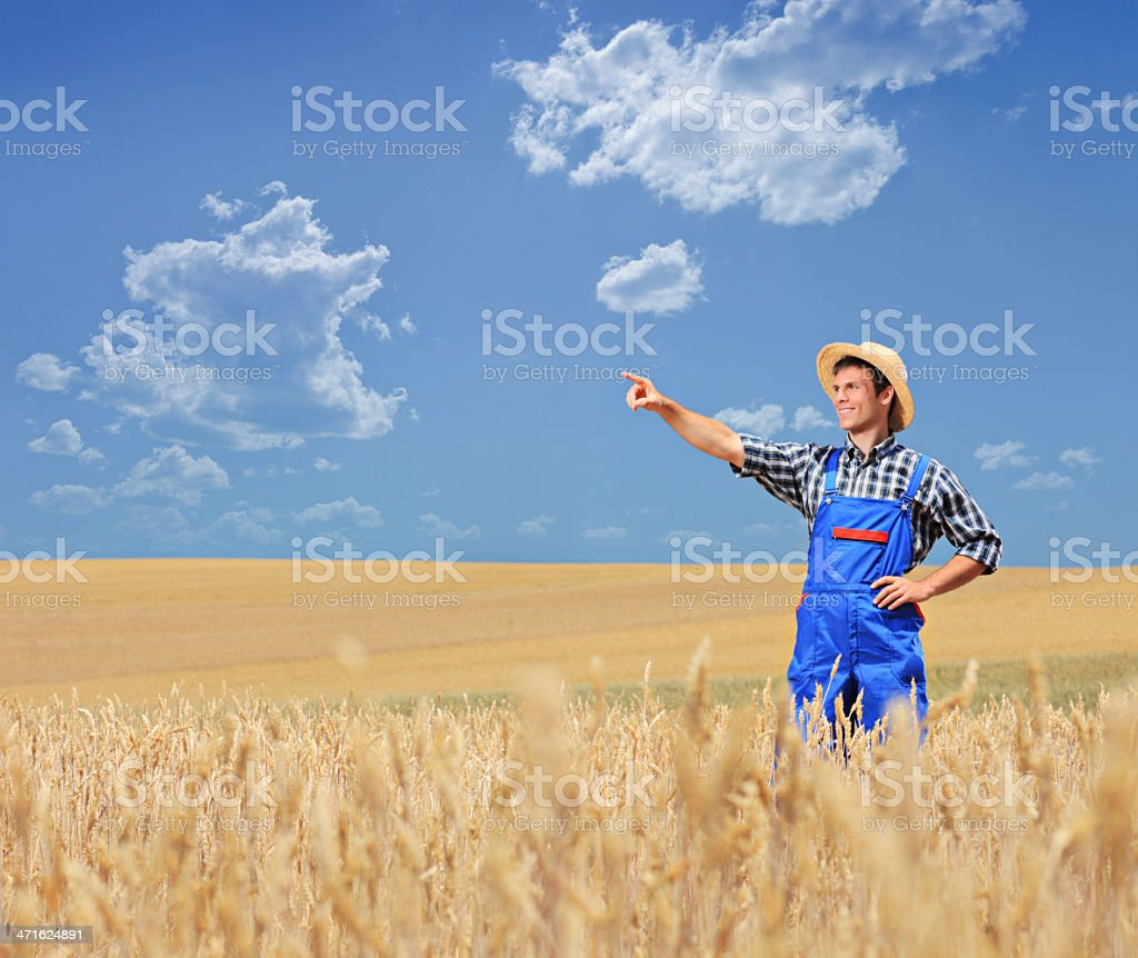 Young farmer pointing in a wheat field royalty-free stock photo