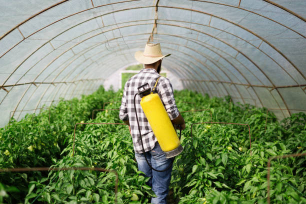Young farmer protecting his plants stock photo