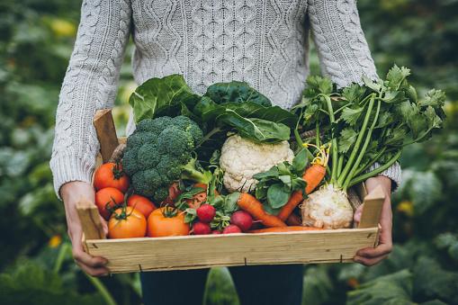 야채 가득 차 있는 크 레이트를 가진 젊은 농부 건강한 생활방식에 대한 스톡 사진 및 기타 이미지