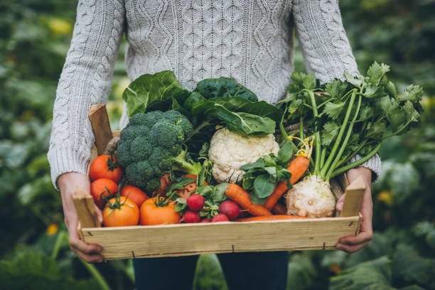 young farmer with crate full of vegetables - organic farm stock photos and pictures