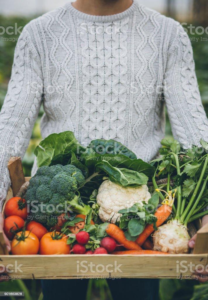 Junglandwirt mit Kiste voll mit Gemüse – Foto
