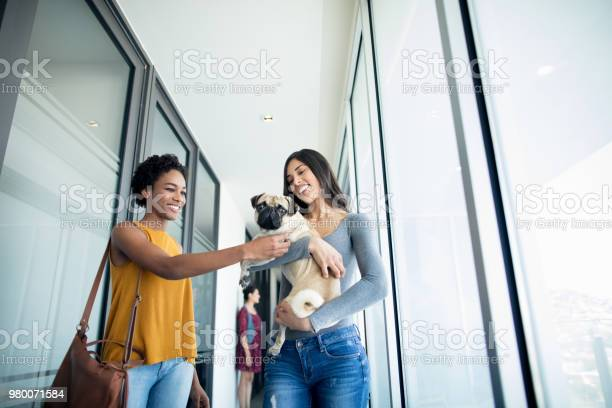 Young female adults carrying and playing with dog picture id980071584?b=1&k=6&m=980071584&s=612x612&h=fxxchnibd4q tdy1yukyo4kzi32l0gp4jca eofggos=