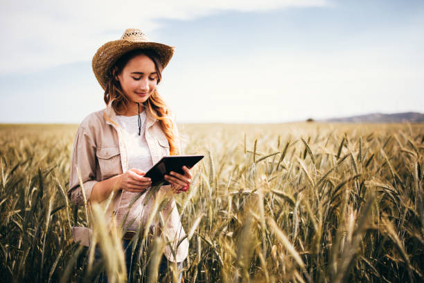Young female agriculture scientist checking wheat crops with digital tablet stock photo