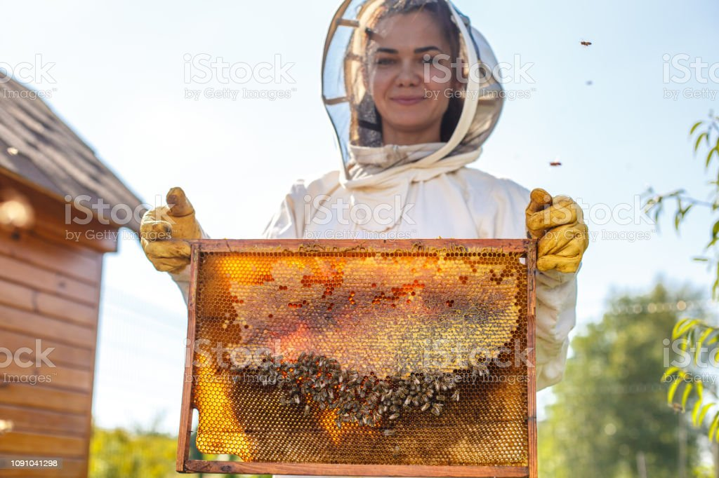 Young female beekeeper hold wooden frame with honeycomb. Collect honey. Beekeeping concept. stock photo
