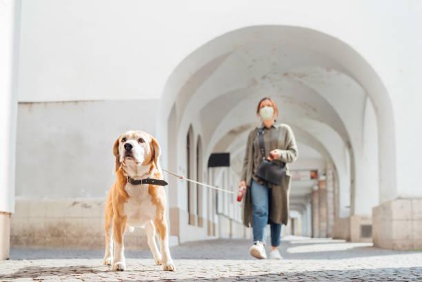 Joven vestida de lujo usando una máscara facial como un coronavirus que difunde la prevención caminando con su perro beagle en viejas plazas y calles europeas desiertas. Imagen global del concepto de pandemia COVID-19. - foto de stock