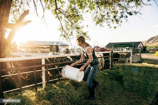 Rural scene of sunlit farmyard in early evening, USA