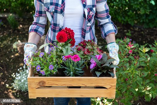istock Young female gardener holding wooden crate full of flowers ready to be planted in a garden. Gardening hobby concept. 958836088