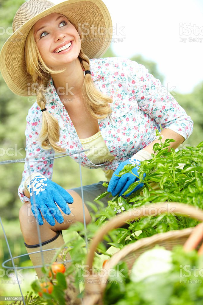 Young female gardener with tomato plant  royalty-free stock photo