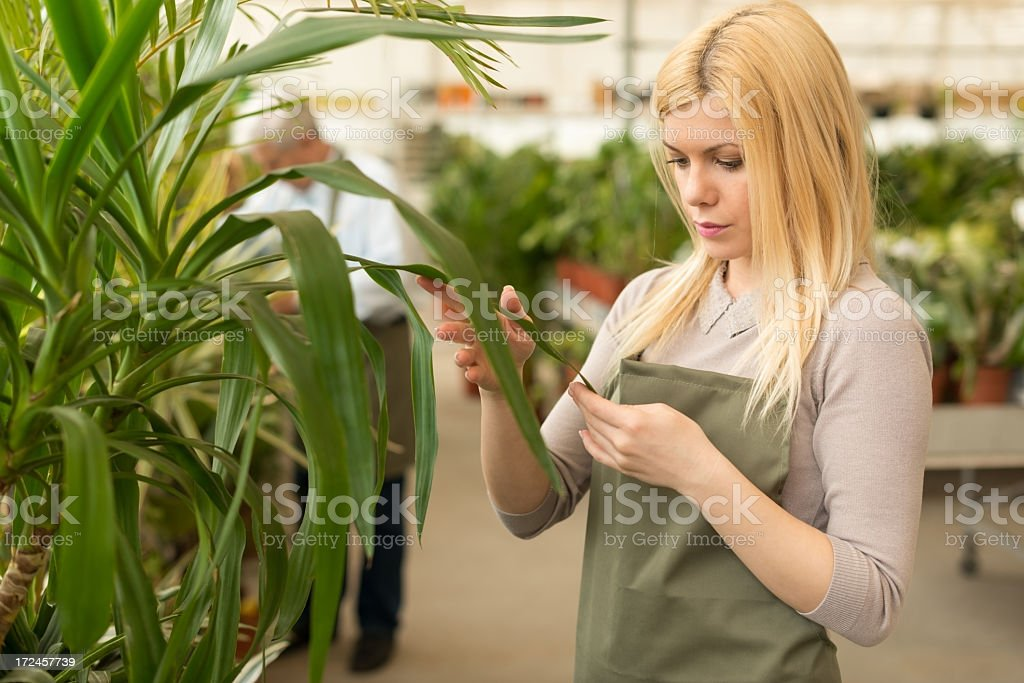 Young female gardener working in greenhouse royalty-free stock photo