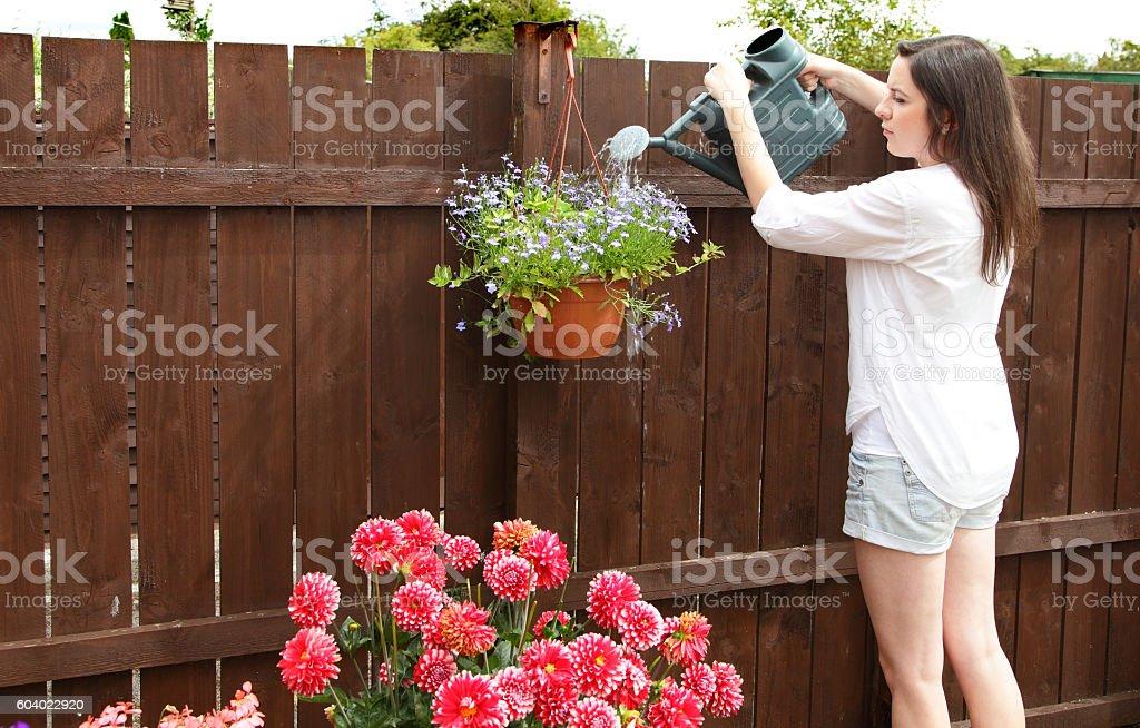 young female in garden watering her hanging basket-flowers – Foto
