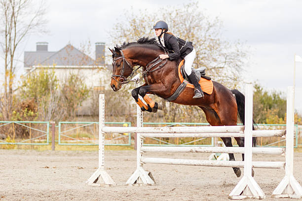 Young female rider on bay horse jump over hurdle picture id626236138?b=1&k=6&m=626236138&s=612x612&w=0&h=79laysb7intu5d5sti ert hgqxodtodfpprmxqq5jg=