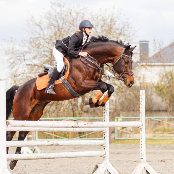 unga kvinnliga ryttare på bay hästen hoppa över hindret - hästhoppning bildbanksfoton och bilder
