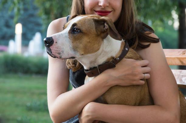 jeune femelle est assis sur un banc et embrasse son chien belle staffordshire terrier sur une chaude journée d'été - femme seule s'enlacer photos et images de collection