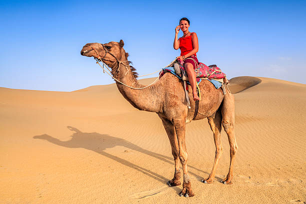 young female tourist using mobile on a camel, rajasthan, india - deve stok fotoğraflar ve resimler