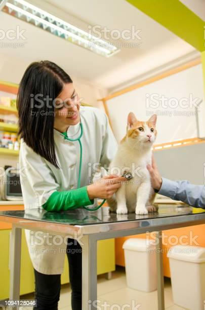 Young female veterinarian checking cat picture id1094128046?b=1&k=6&m=1094128046&s=612x612&h=jq8yfmqysiawfvwp9k6z sftmwf1ug1shgx z6u kvk=