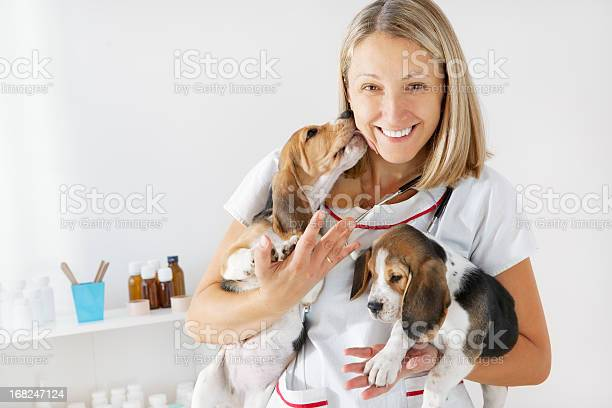 Young female veterinarian embracing cute little puppies beagles picture id168247124?b=1&k=6&m=168247124&s=612x612&h=j fyikwy9scsll6praw5tkk4bhcnngwmwy4s7yukxee=