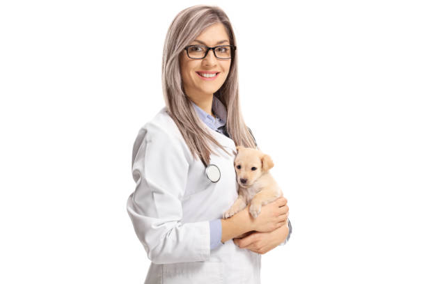 Young female veterinarian holding a small puppy dog stock photo