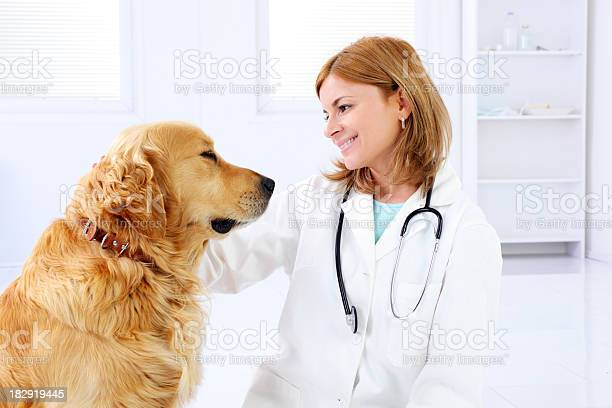 Young female veterinary caring of a cute beautiful dog picture id182919445?b=1&k=6&m=182919445&s=612x612&h=vfrajtjqnhn9havebjfqa40wbscpq5k5 mhhed0iu5c=