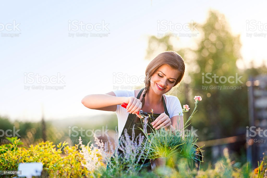 Young gardener cutting little flower plant, green sunny nature stock photo