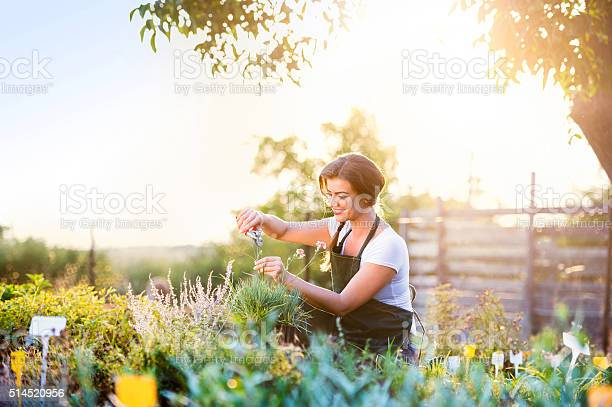 Young gardener cutting little flower plant green sunny nature picture id514520956?b=1&k=6&m=514520956&s=612x612&h=q2yekt8dragetrz8ozliuvudg414dvieatmdyso2kqu=