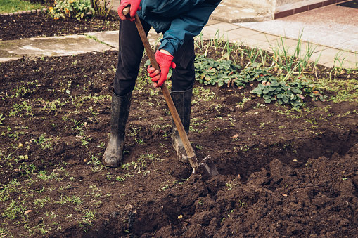 Young gardener in a blue jacket tilled his land. Soil preparation for next year. Improving the nutritional side of arable land. Agriculture life concept.