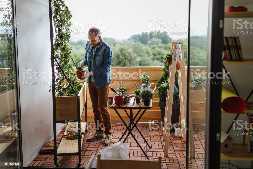 Young gardener in a small garden on the balcony royalty-free stock photo