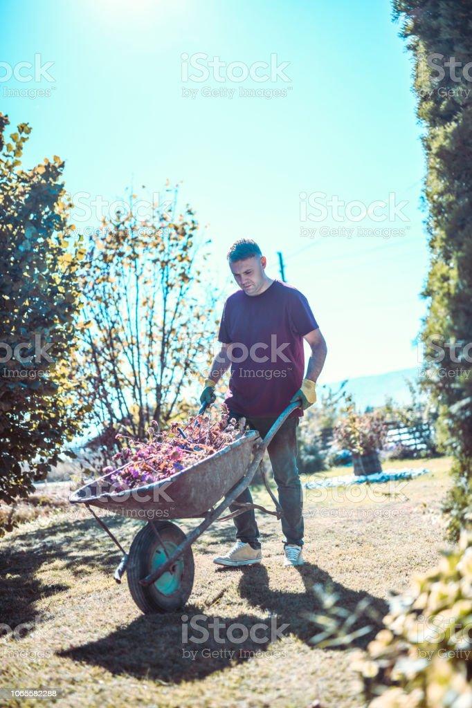 Young Gardener With His  Wheelbarrow stock photo