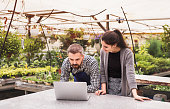 istock Young gardeners with laptop in a large greenhouse with pots of seedlings. 925315994