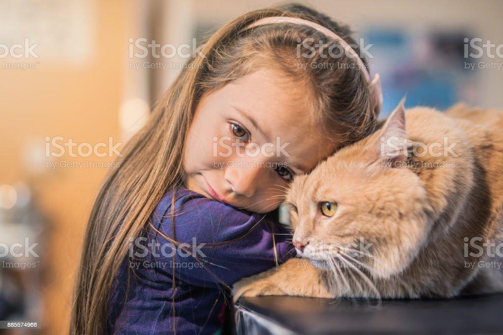 Chica joven y su gato Maine Coon en la visita al veterinario. - foto de stock