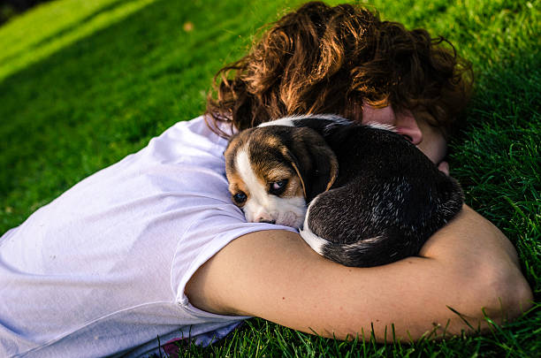 young girl and puppy beagle with blue eyes foto