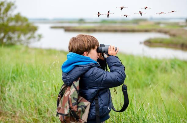 Young girl bird watching stock photo