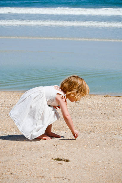 young girl collecting seashells at the beach - little girl picking up sea shells at the beach stock pictures, royalty-free photos & images