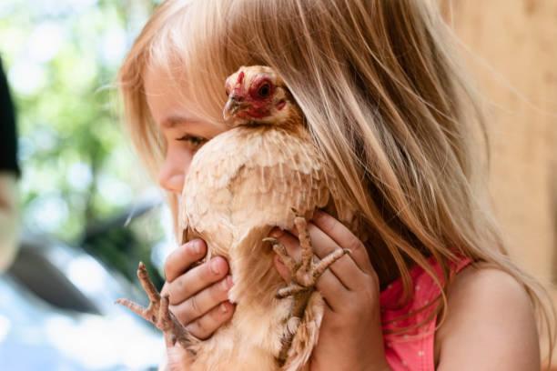 Young Girl Cuddling a Bantam Hen 1 – zdjęcie