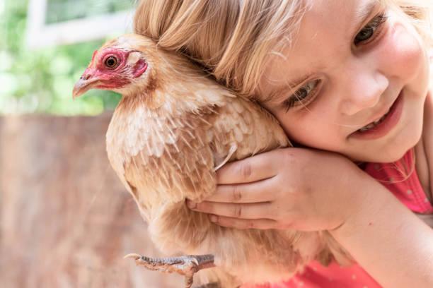 Young Girl Cuddling a Bantam Hen 2 – zdjęcie