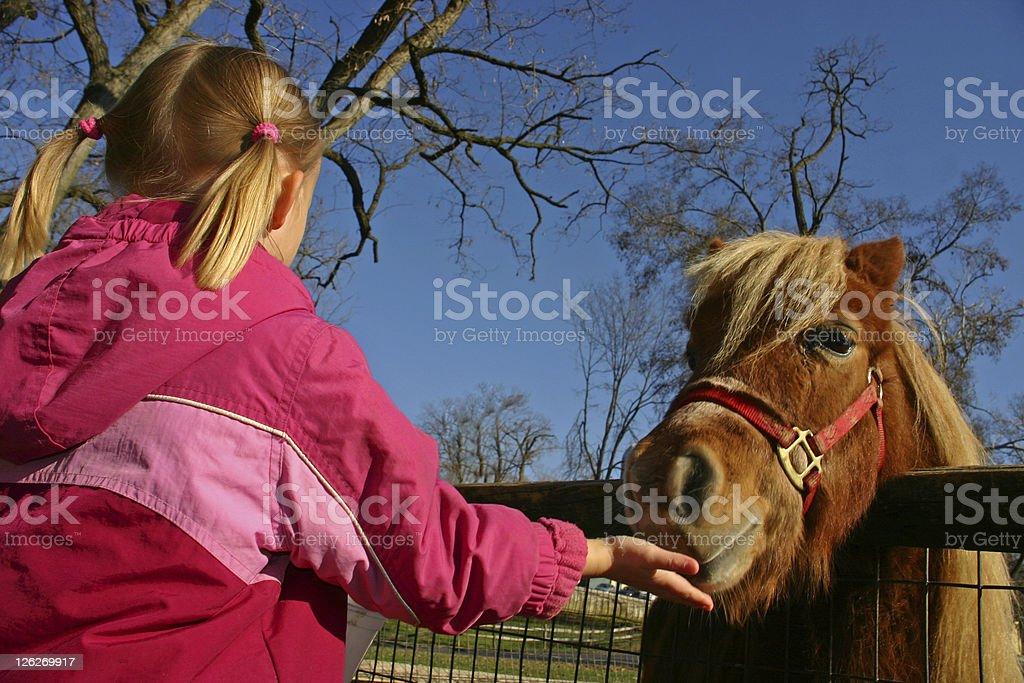 Young girl feeding a pony/horse royalty-free stock photo